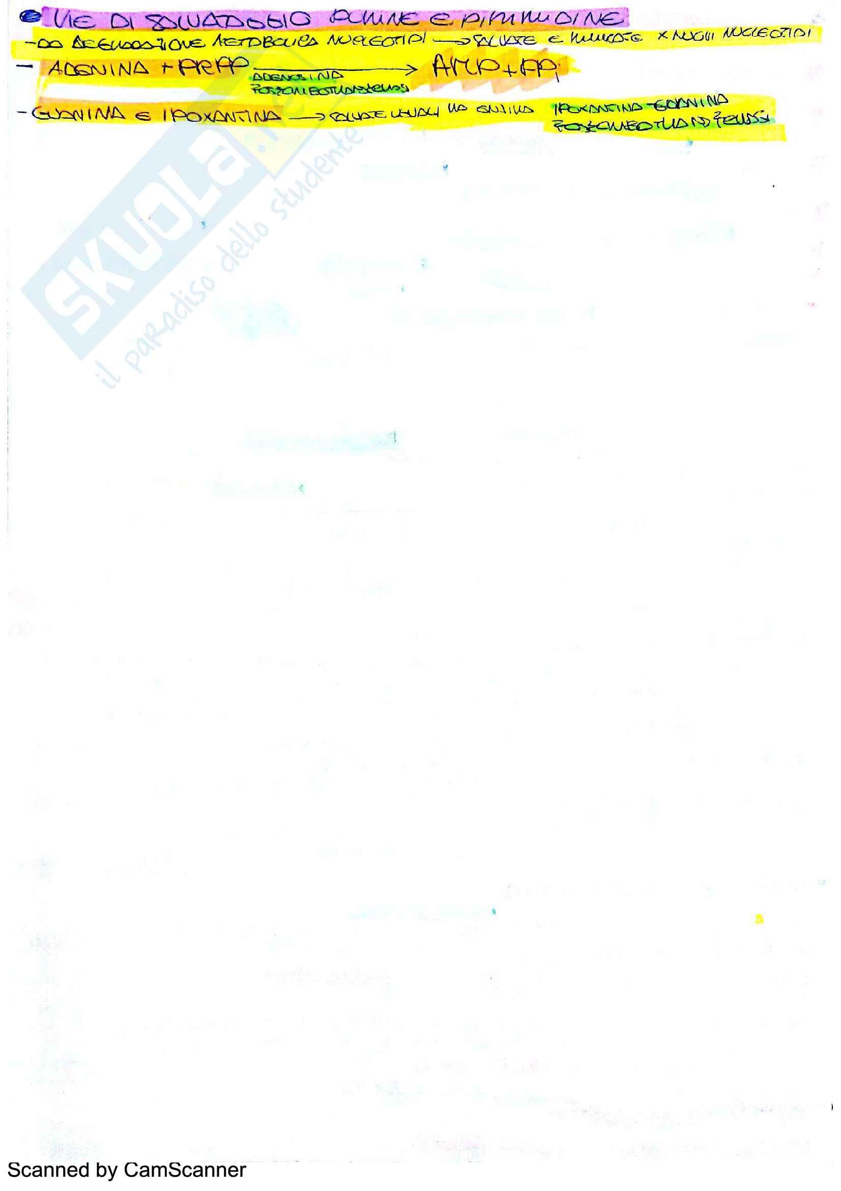Biochimica: appunti + formule Pag. 11