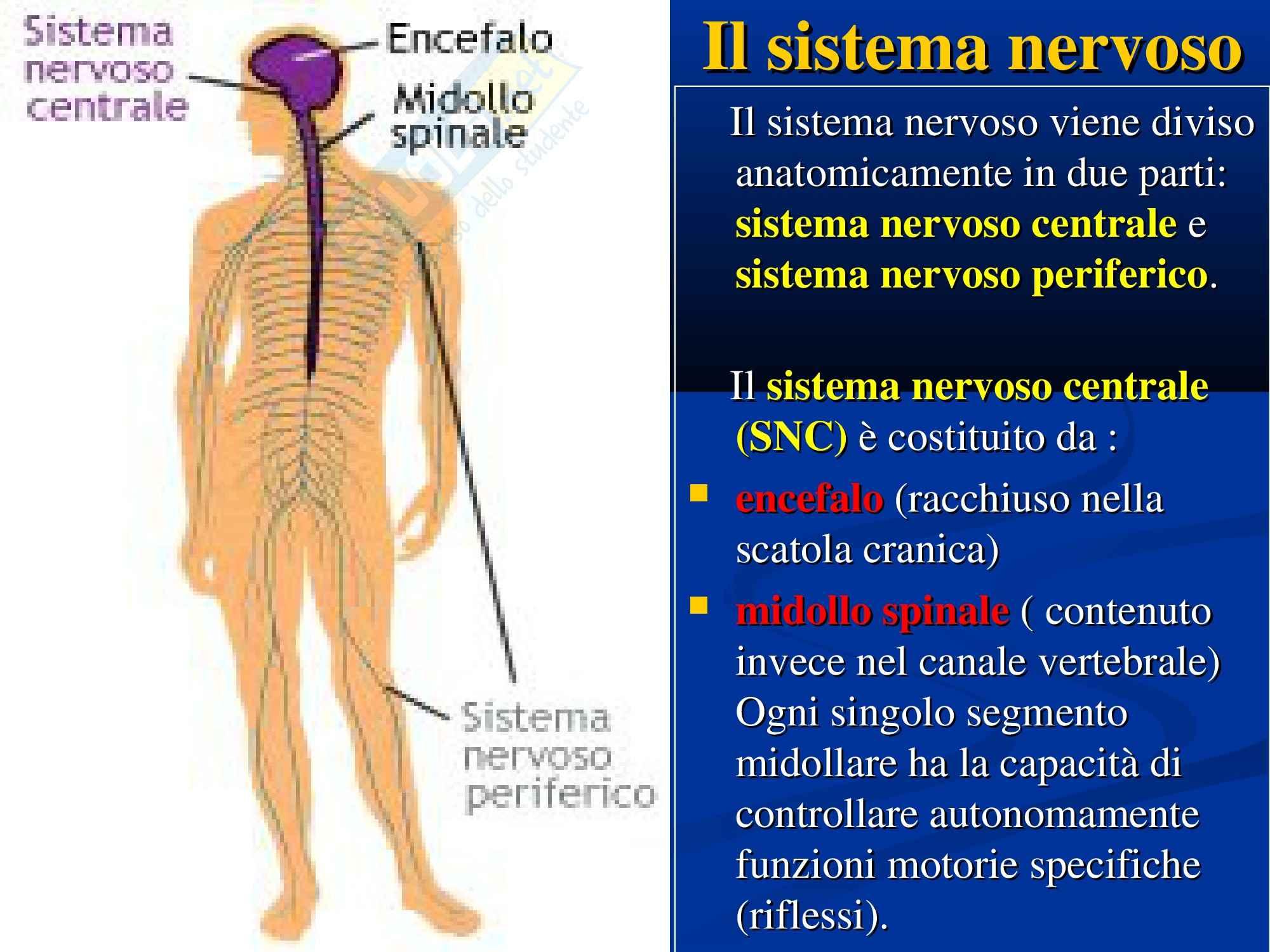 Anatomia con elementi di istologia - sistema nervoso (parte prima)