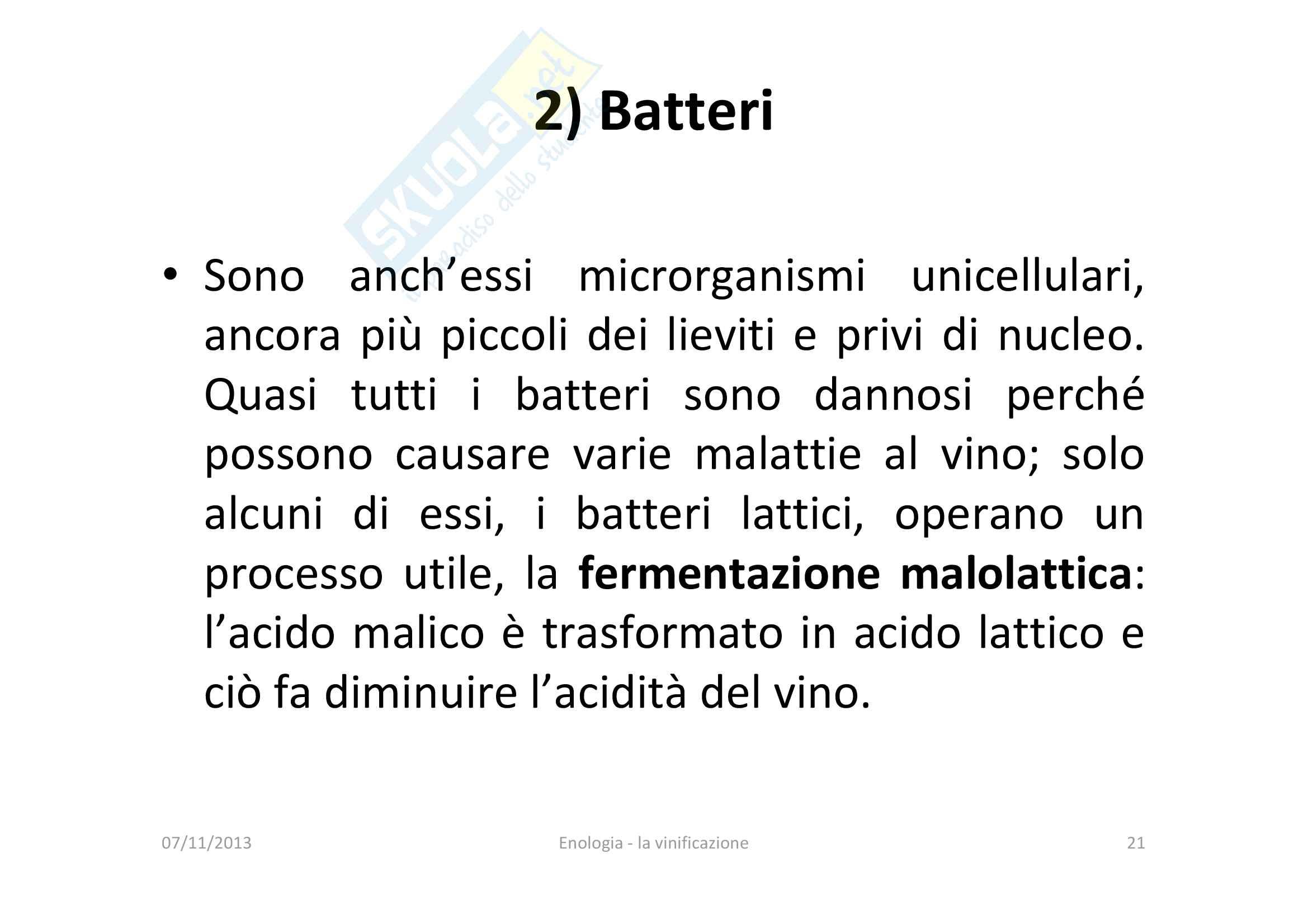 Vinificazione Pag. 21