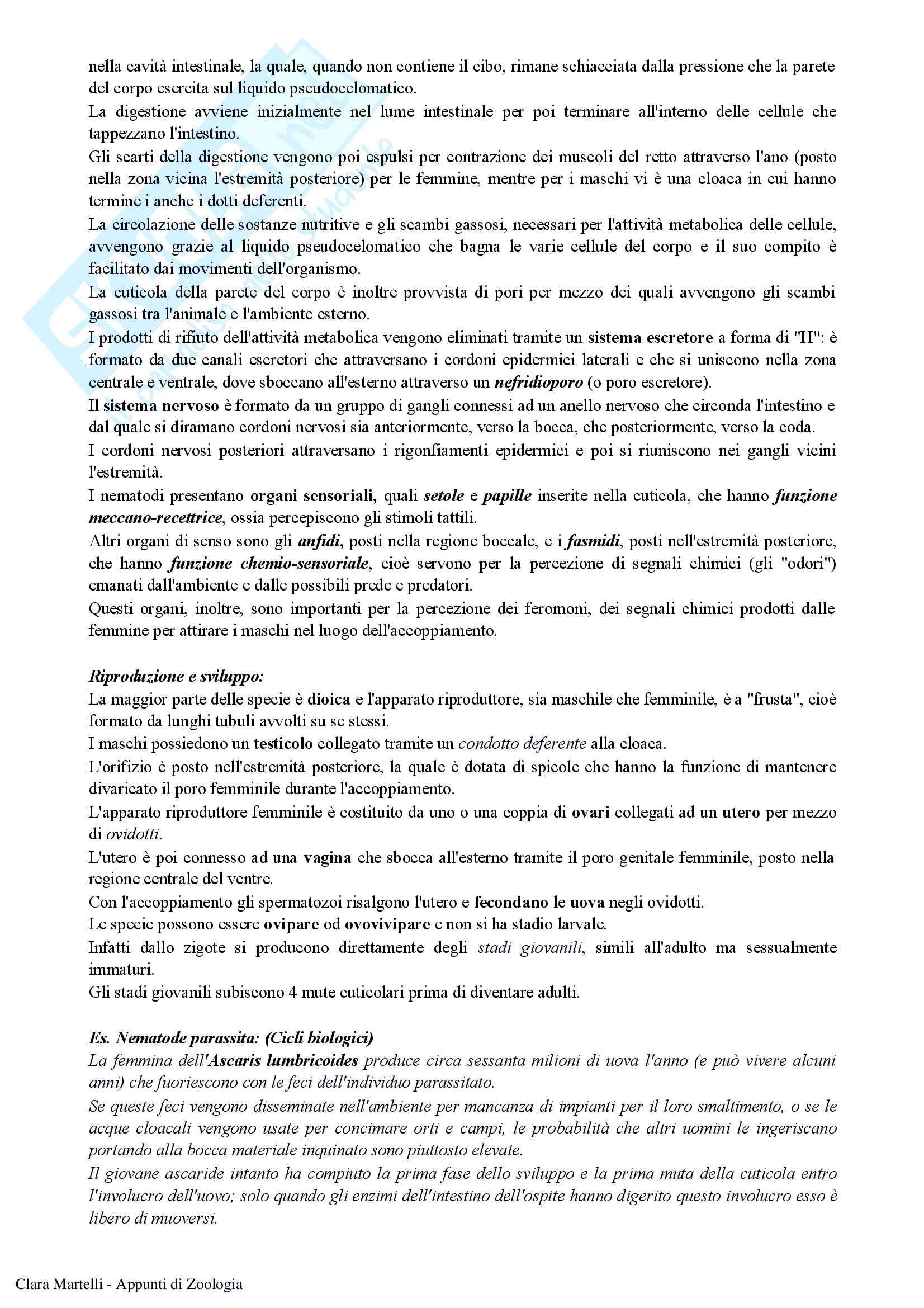Appunti di Zoologia (prof. Turillazzi, prof.ssa Scapini) Pag. 81