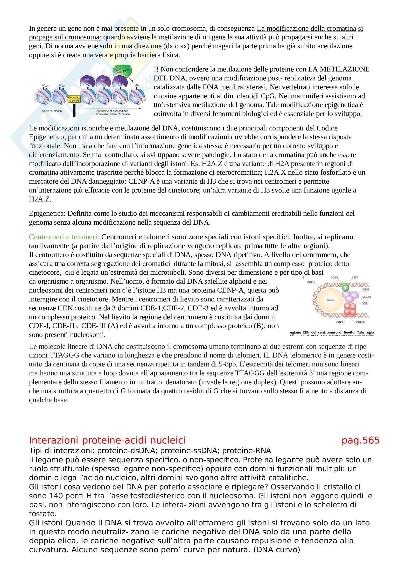 Riassunto esame Biologia Molecolare, Prof. Pellicioli, libro consigliato Biologia Molecolare, Amaldi Pag. 26