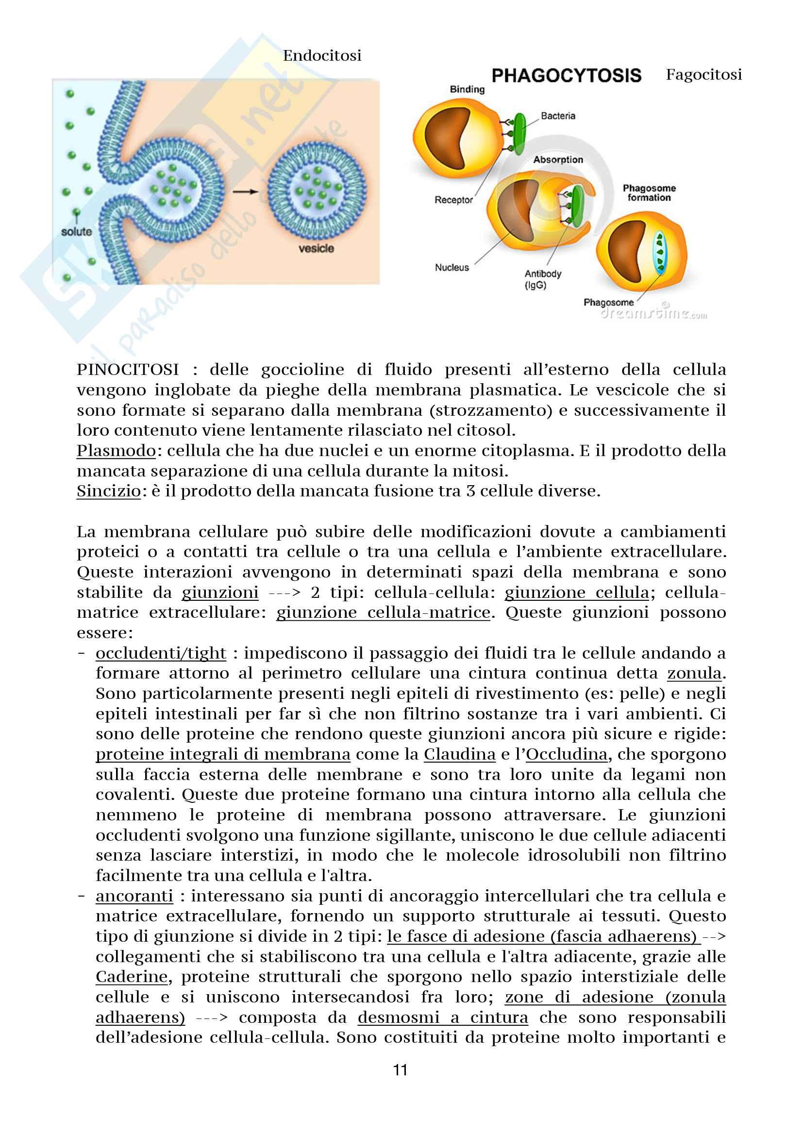 Biologia della cellula Pag. 11