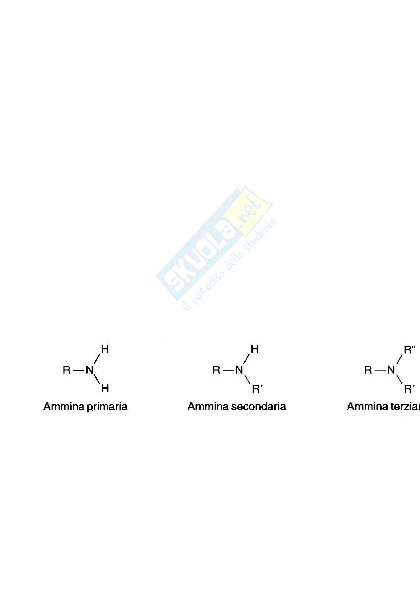 Chimica - proprietà delle ammine
