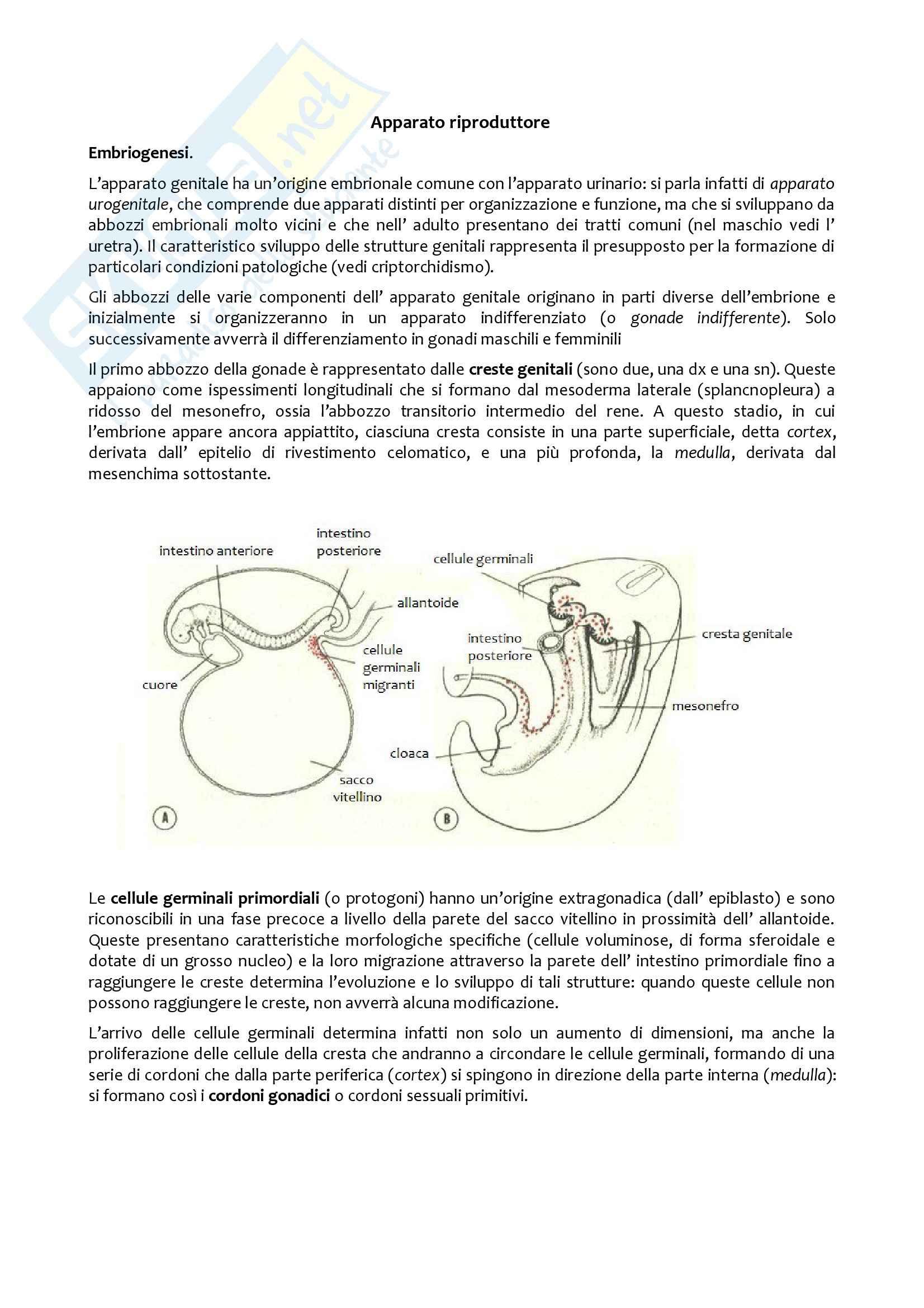Apparato Riproduttore, Anatomia comparata