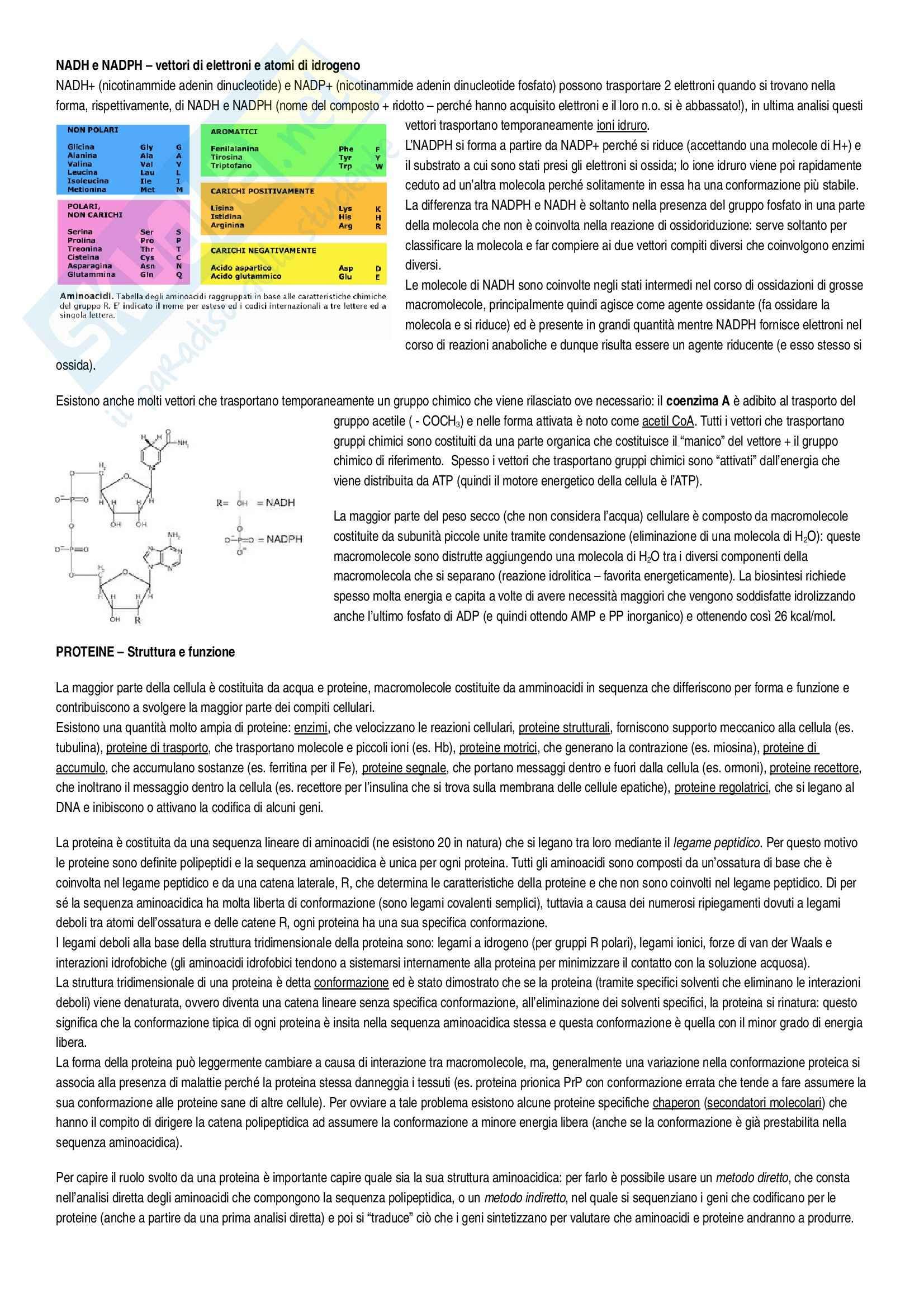 Riassunto esame Biologia, prof. Rossella, libro consigliato L'essenziale di biologia molecolare della cellula Alberts, Bray Pag. 6