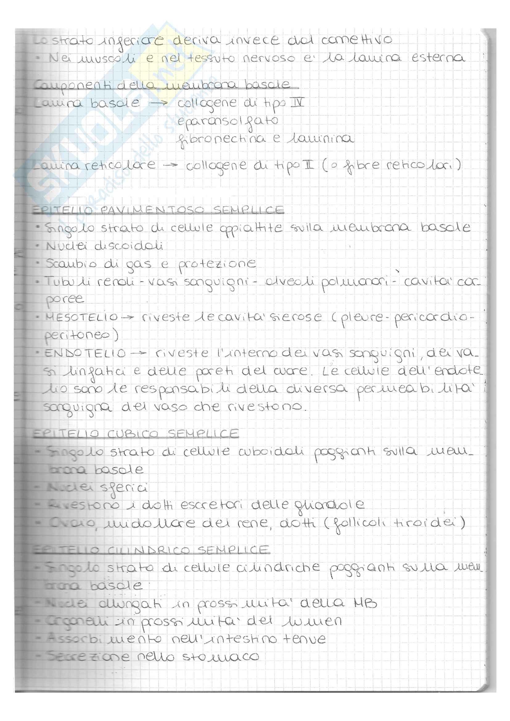 appunto V. Nicolin Istologia