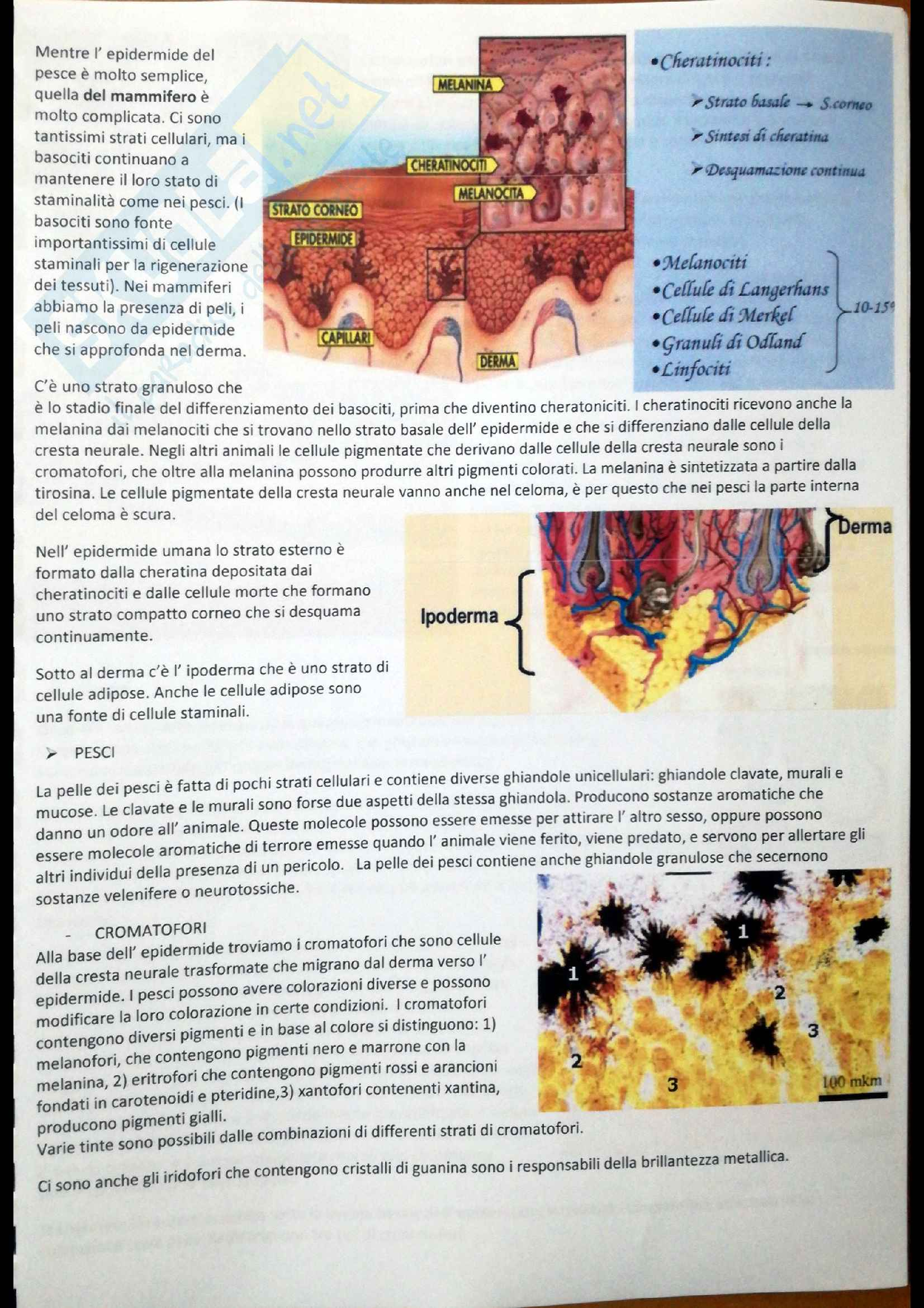 Tegumento, Anatomia Comparata Pag. 2