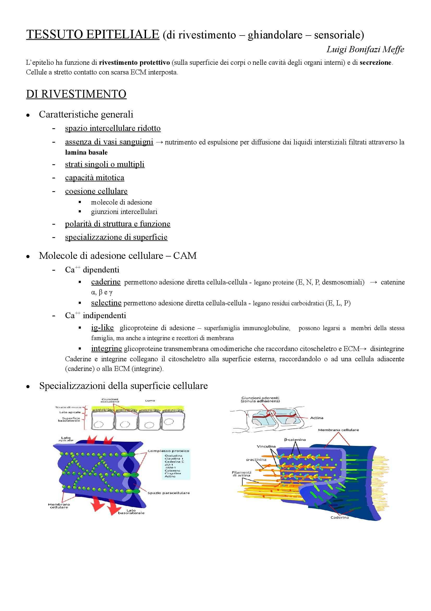 Istologia - tessuto epiteliale