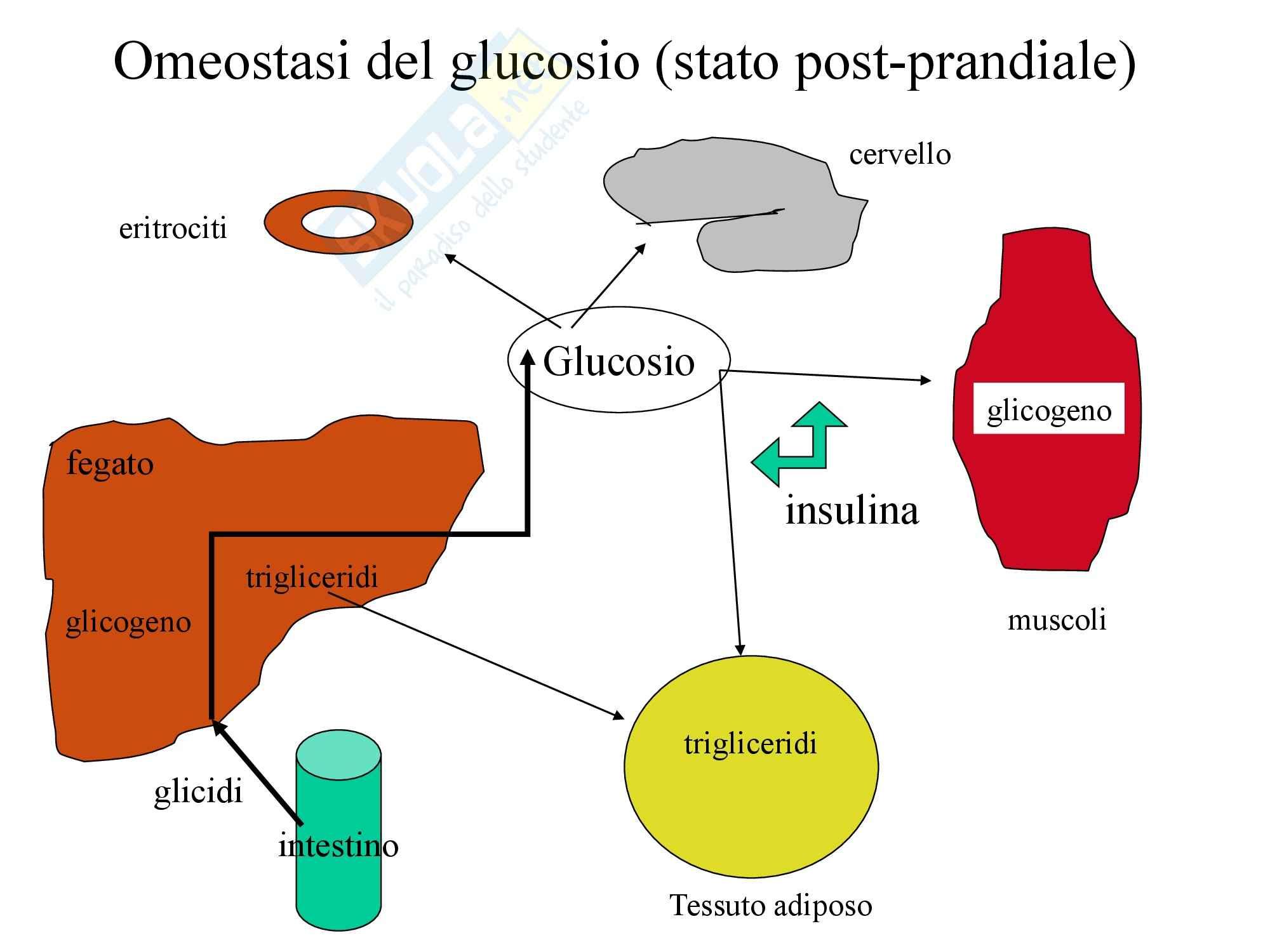 Carboidrati - Glucosio