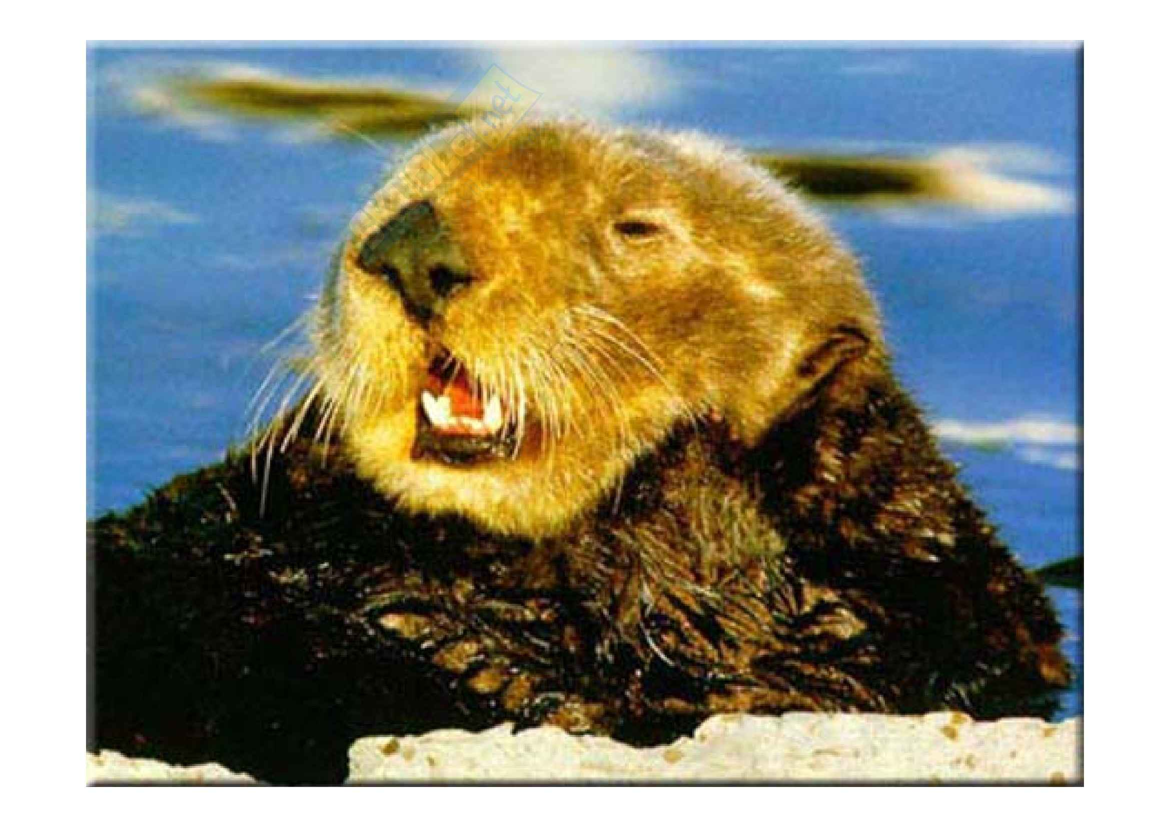 Zoologia - mammiferi marini Pag. 21