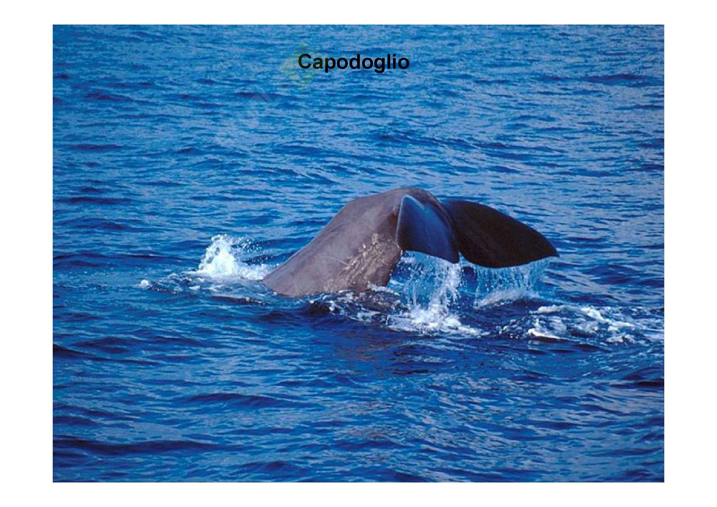 Zoologia - mammiferi marini Pag. 76