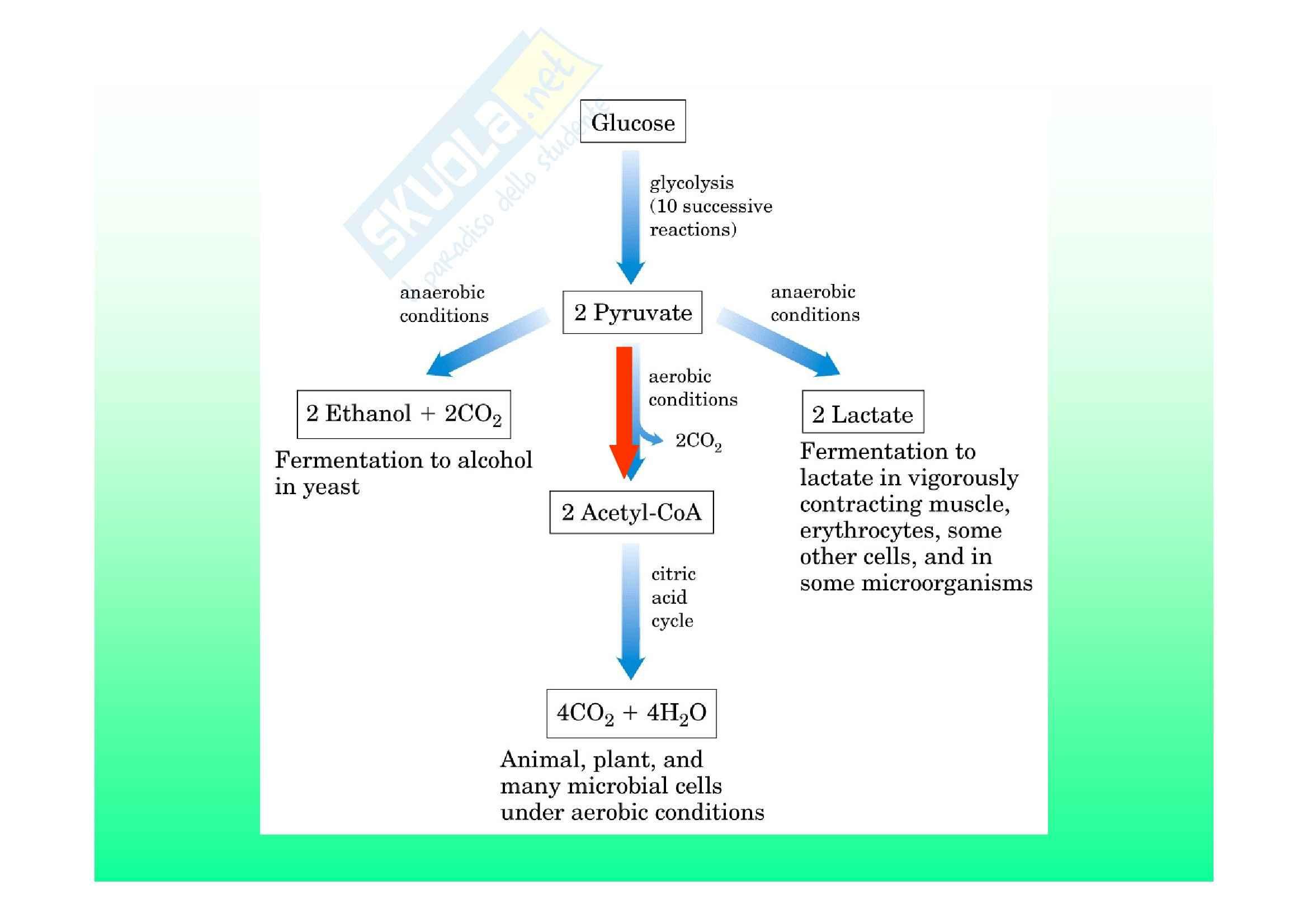 Biochimica II – Lezione 6 – Slides
