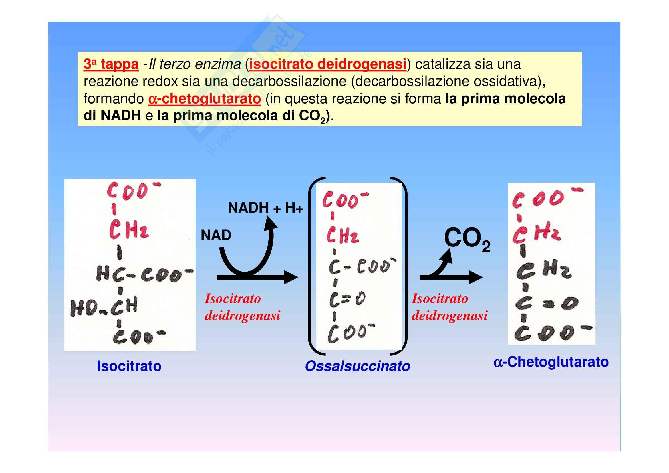 Biochimica II – Lezione 6 – Slides Pag. 21
