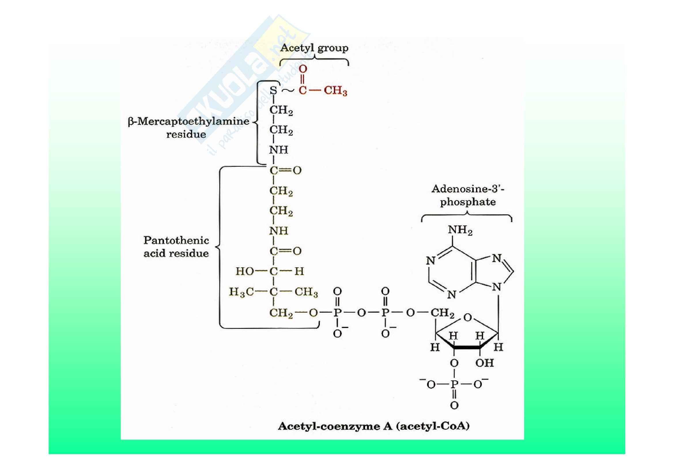 Biochimica II – Lezione 6 – Slides Pag. 6