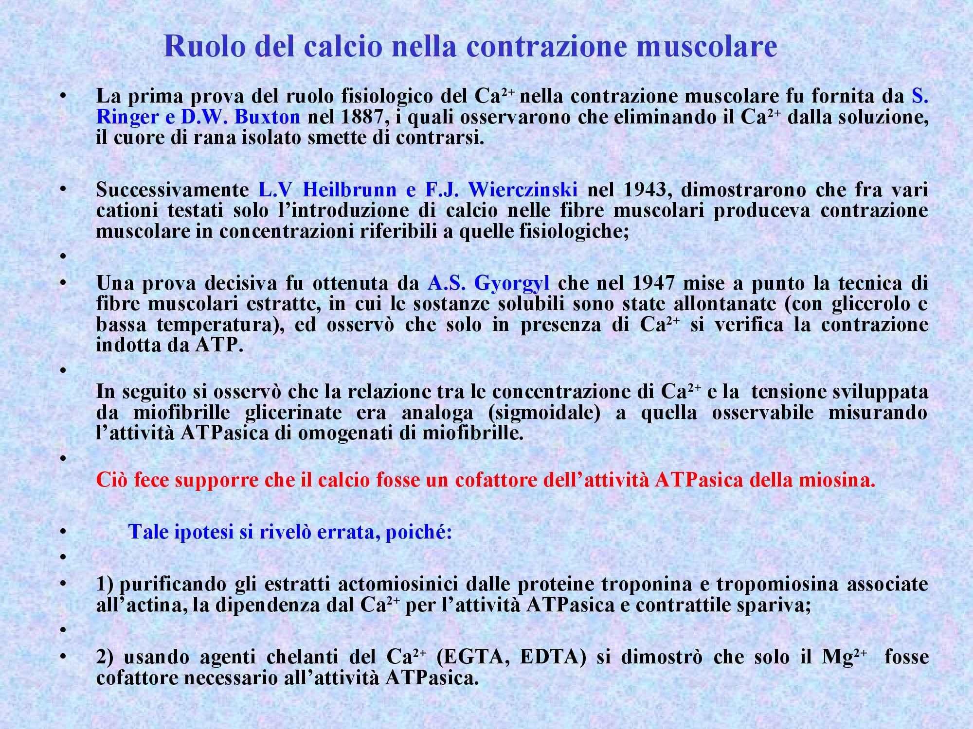 Ruolo del calcio nella contrazione muscolare - Fisiologia II