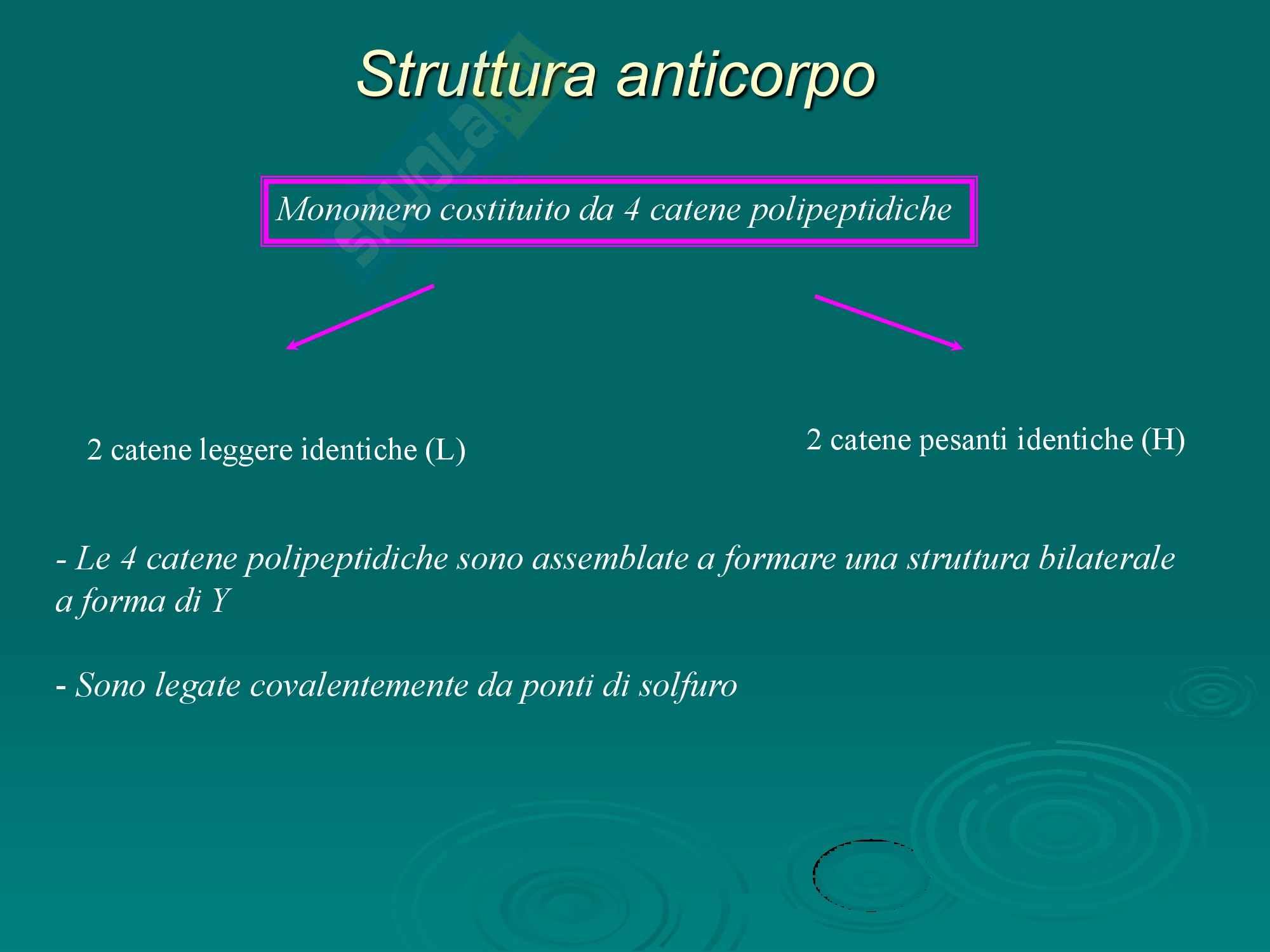Sangue - I linfociti Pag. 6