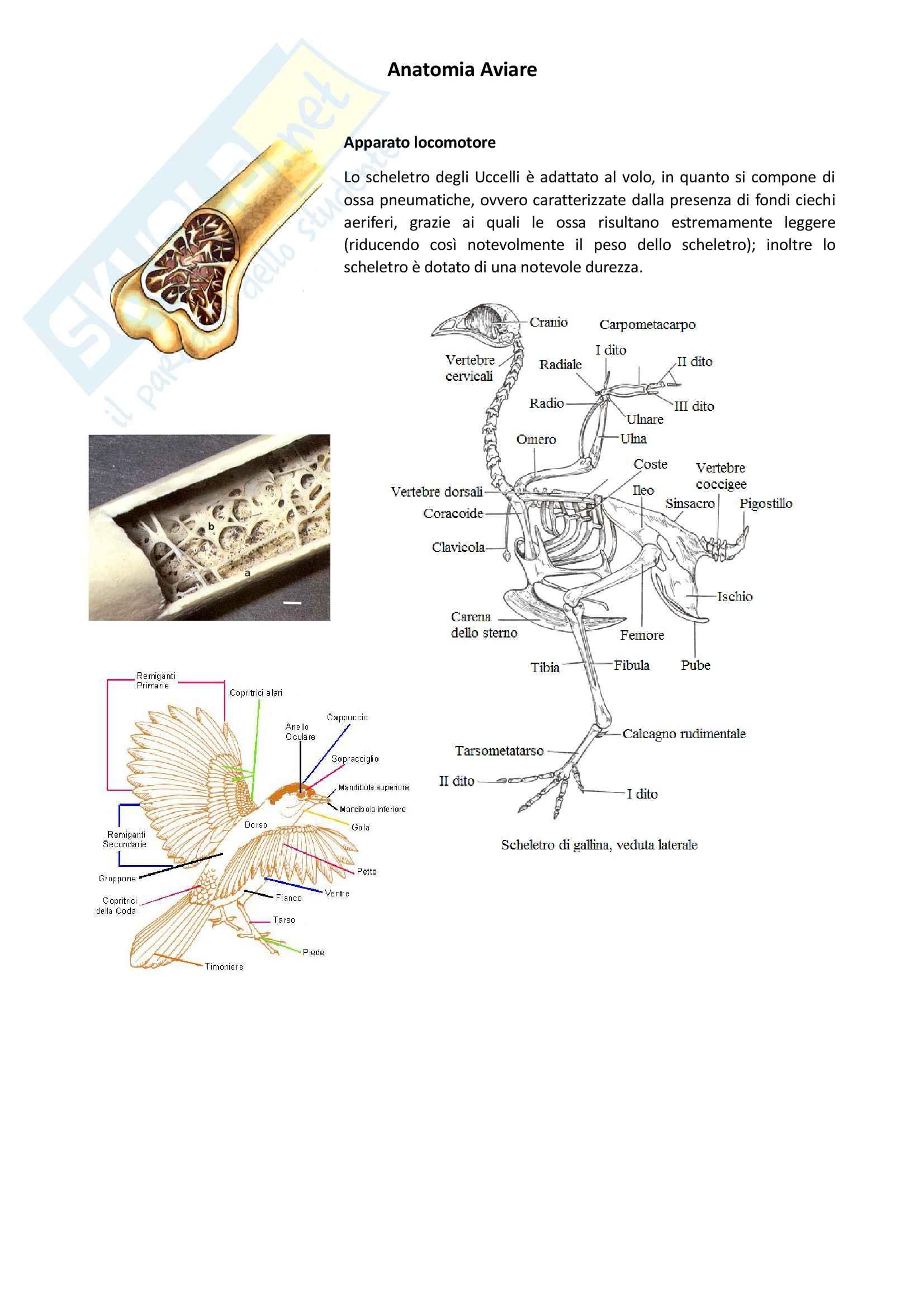 Anatomia Aviare, Anatomia con elementi di istologia