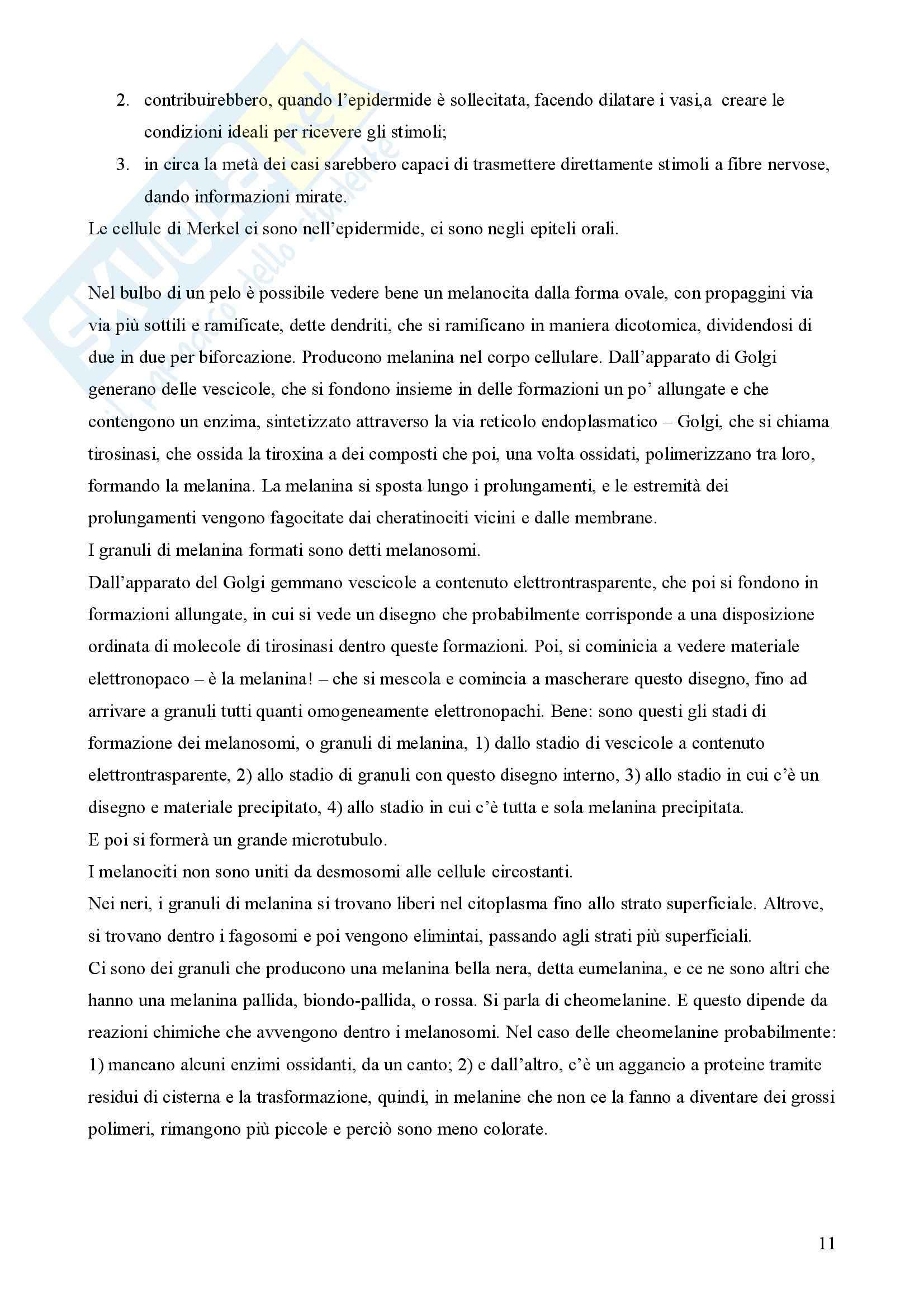 Istologia – Tessuto epiteliale Pag. 11