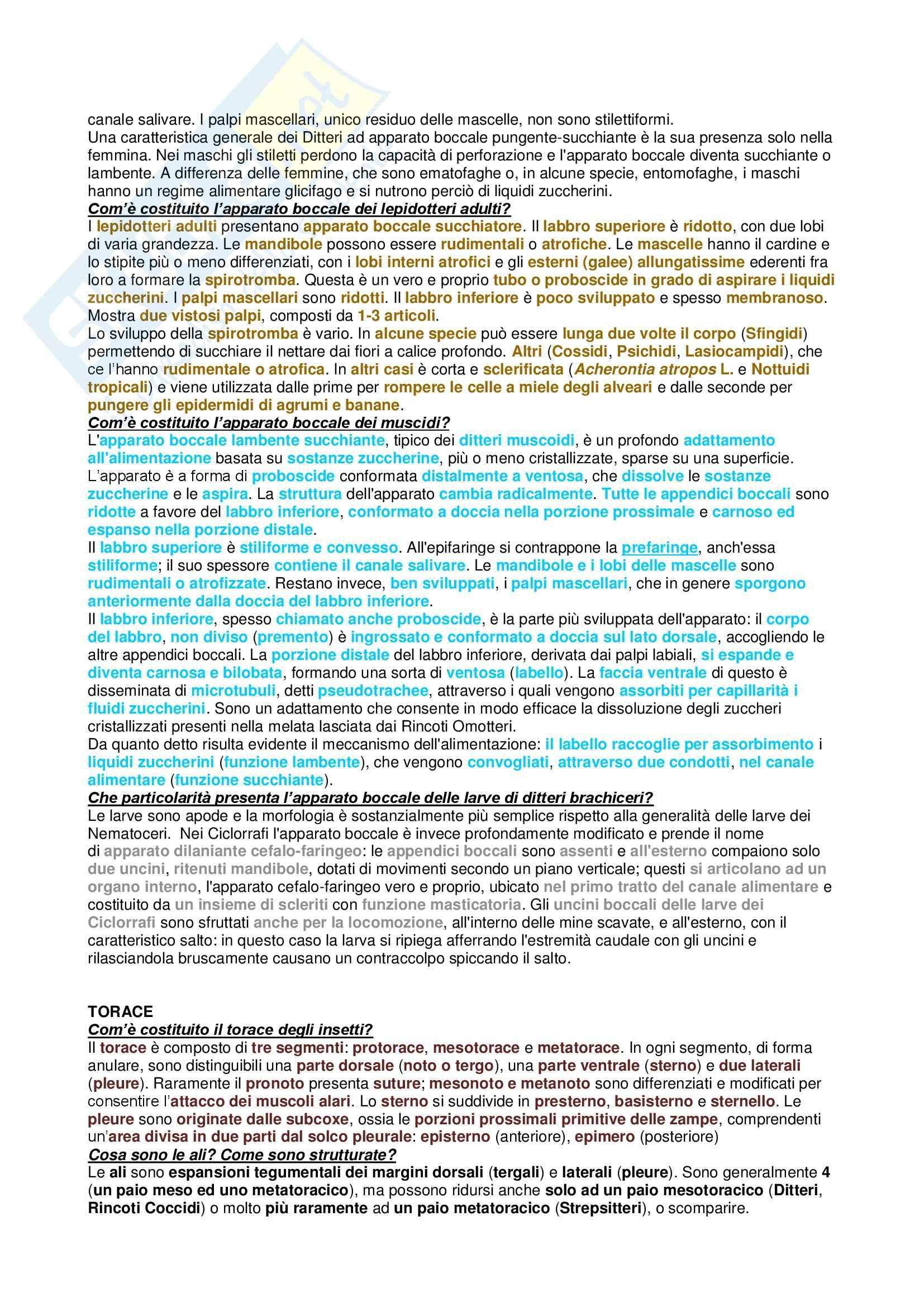 Riassunto esame Entomologia Agraria, prof. De Lillo Pag. 6