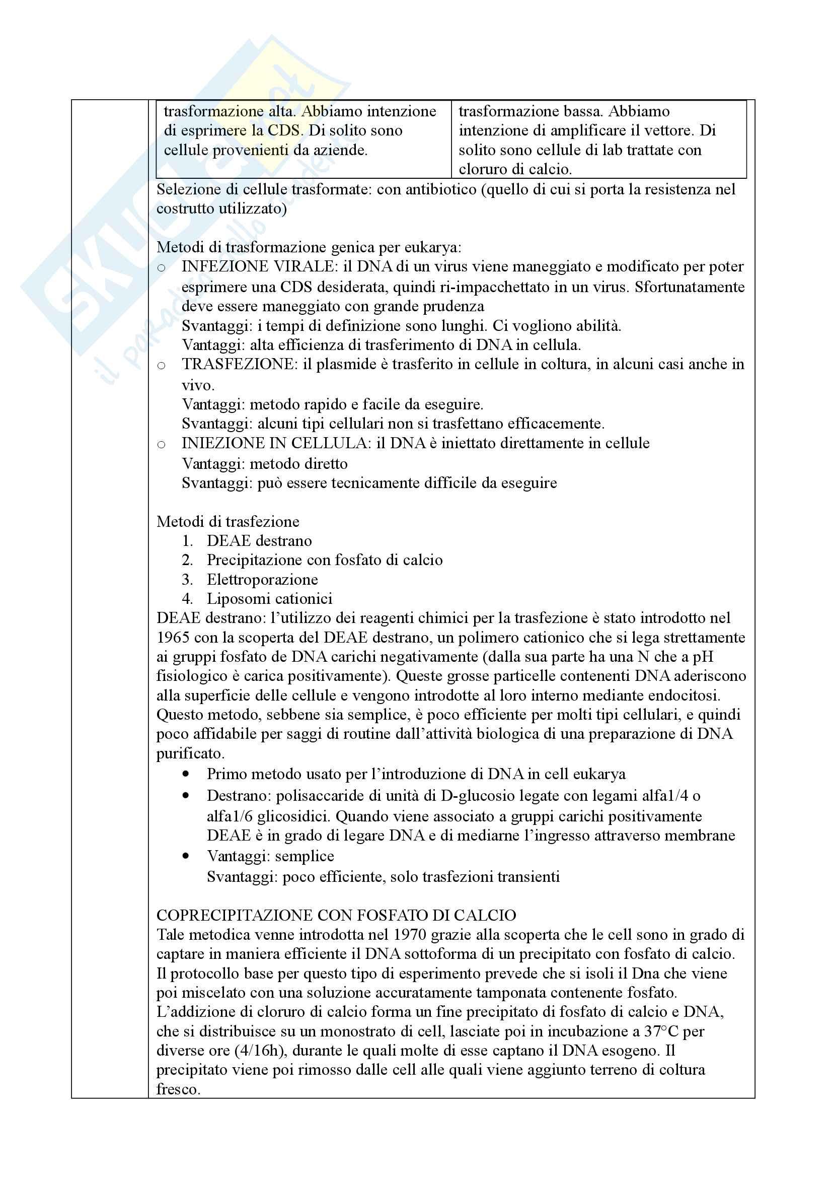 Ingegneria Cellulare Pag. 31