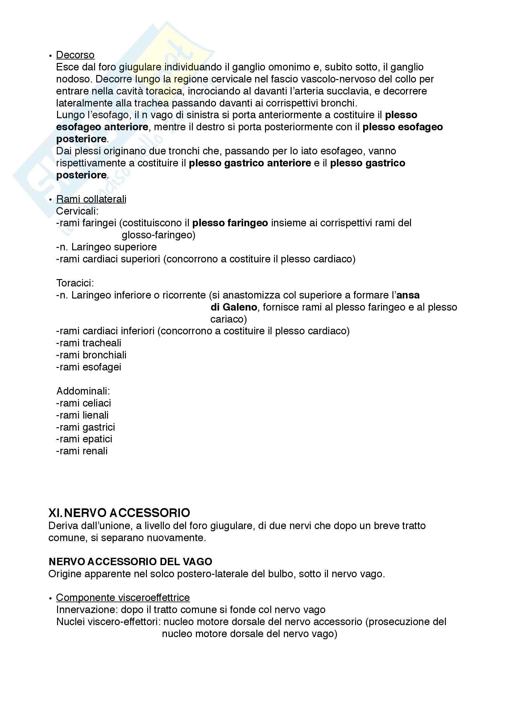 Anatomia III – Nervi cranici – Schemi Pag. 6