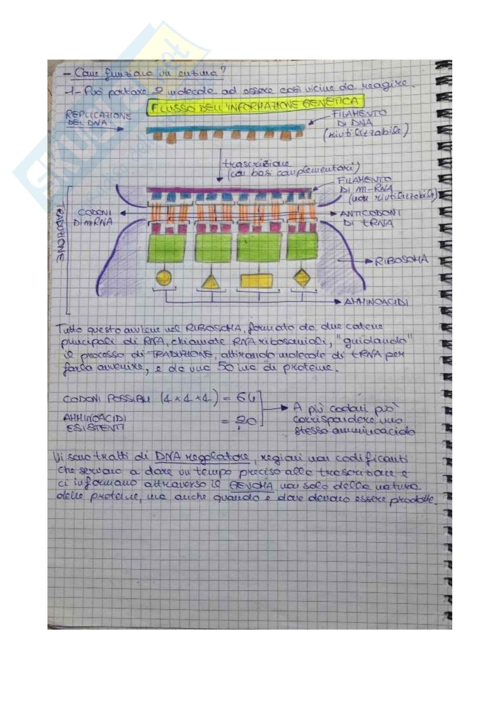 Biologia molecolare della cellula - Appunti Pag. 11