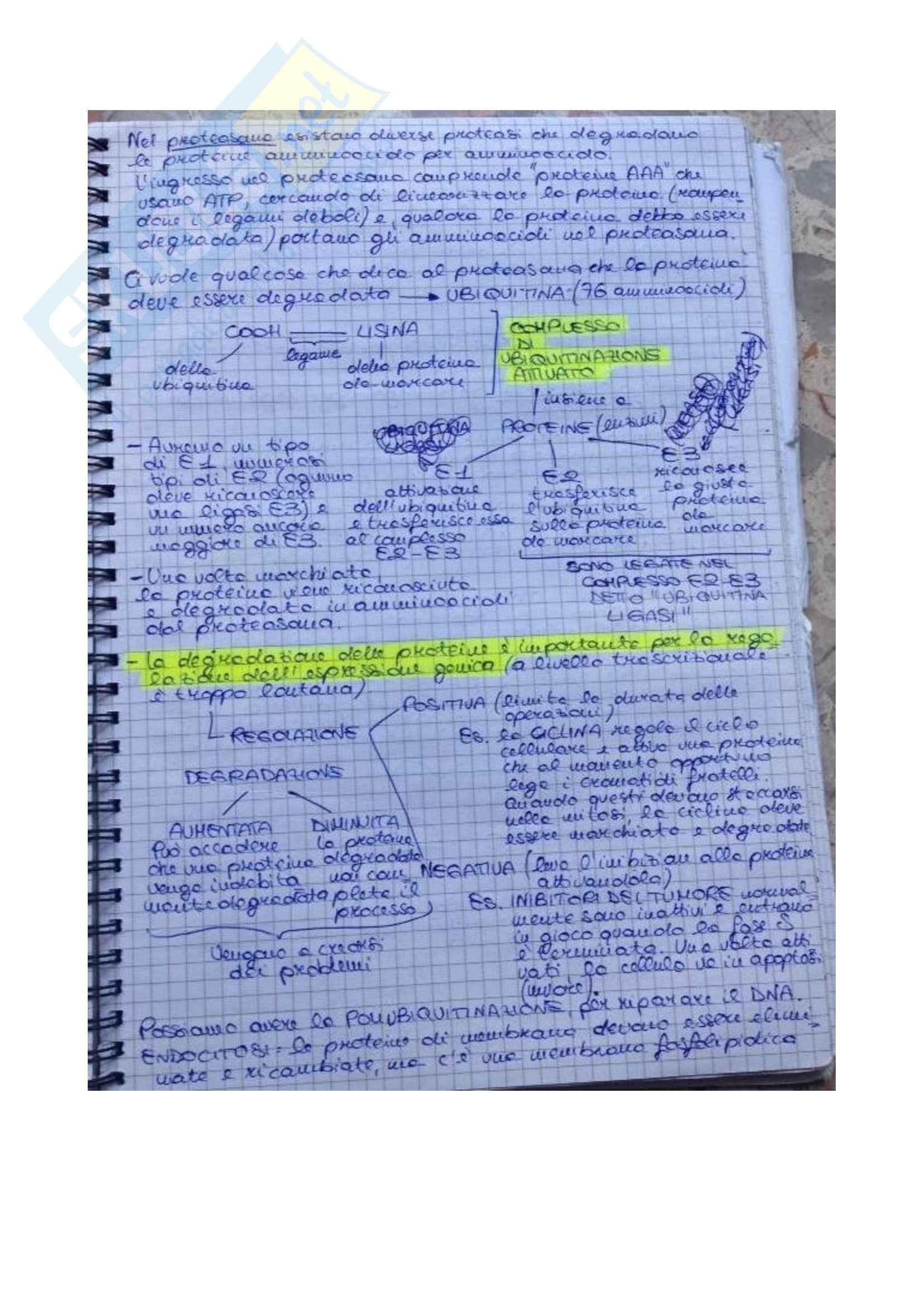 Biologia molecolare della cellula - Appunti Pag. 31