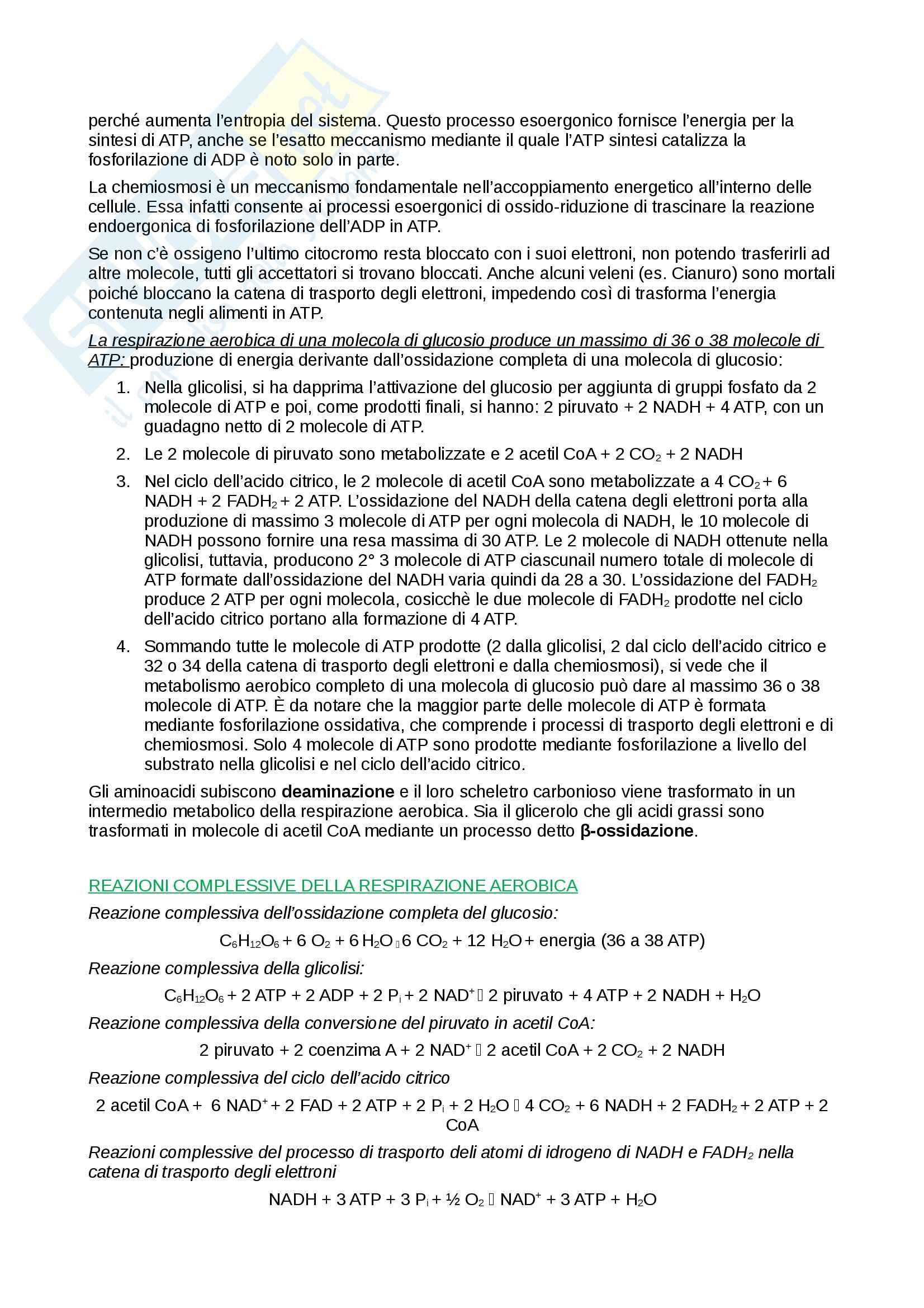Riassunto esame Biologia e Genetica, prof. Combi, libro consigliato Elementi di Biologia, Solomon, Berg, Martin Pag. 36