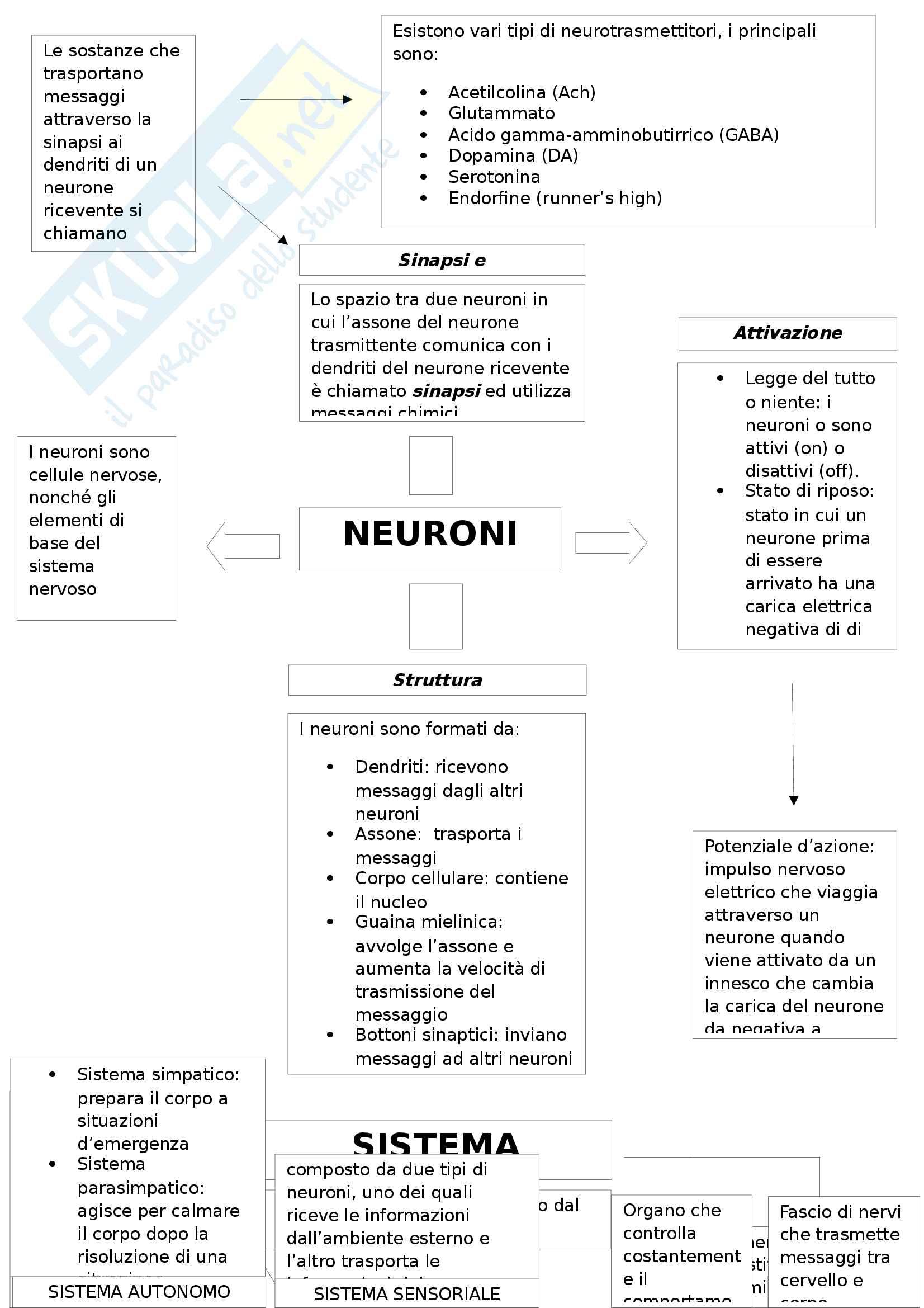 mappa sistema nervoso e cervello