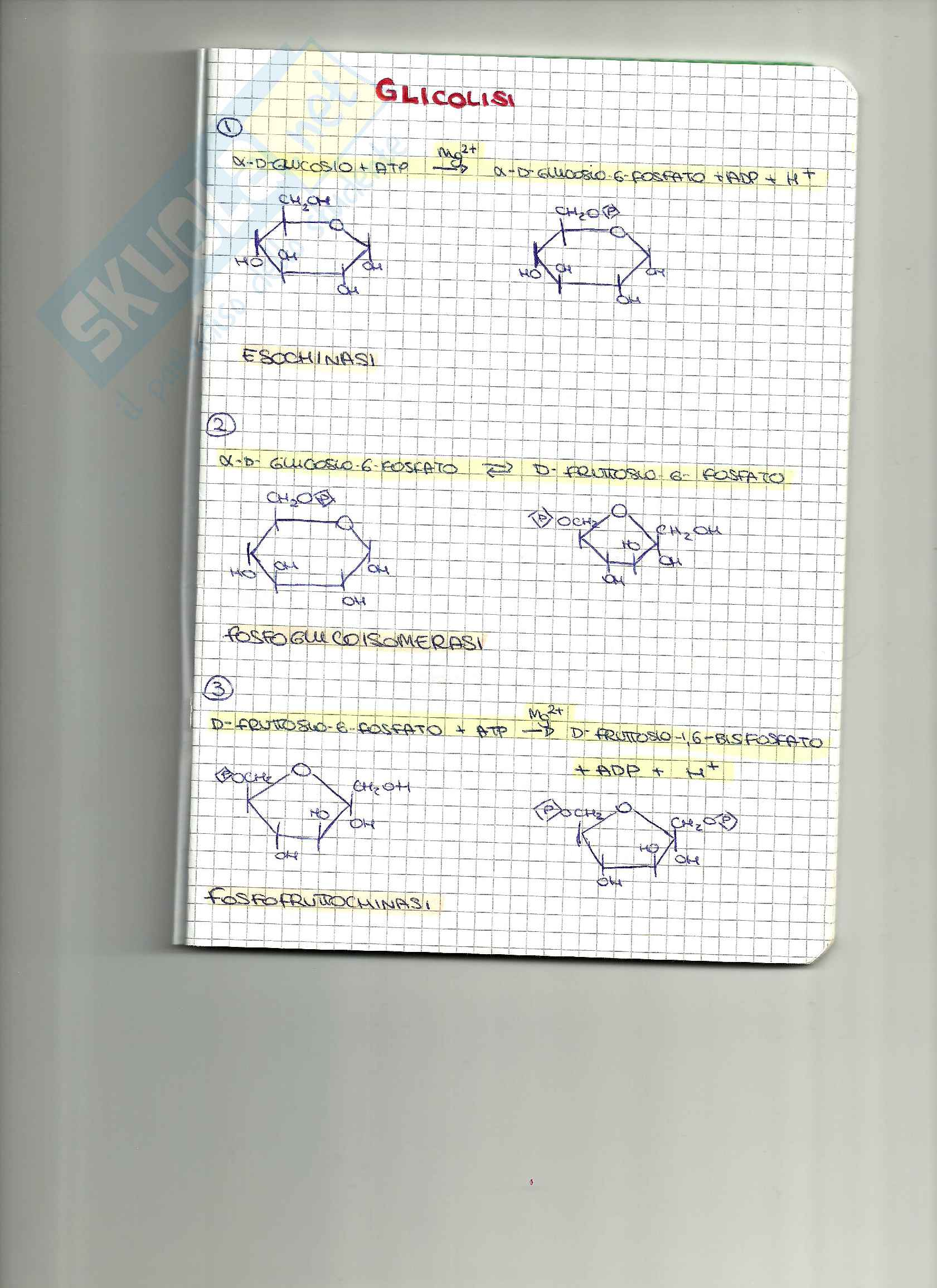 appunto G. Mei Biochimica